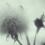 04 Laura-manfredini-In omne tempus